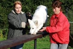 Školka psů - PODZIM 2008