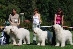 Výstava kavkazských psů 2008
